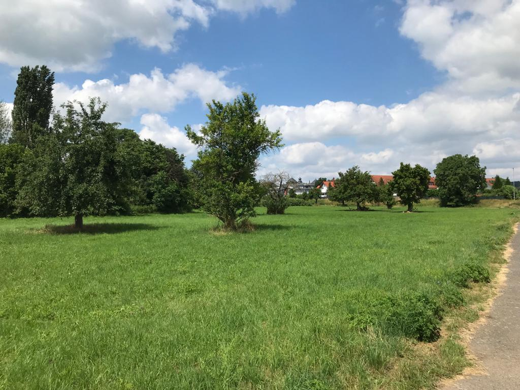 Cleanup: Streuobstwiese Kernstadt Butzbach (Hessen)
